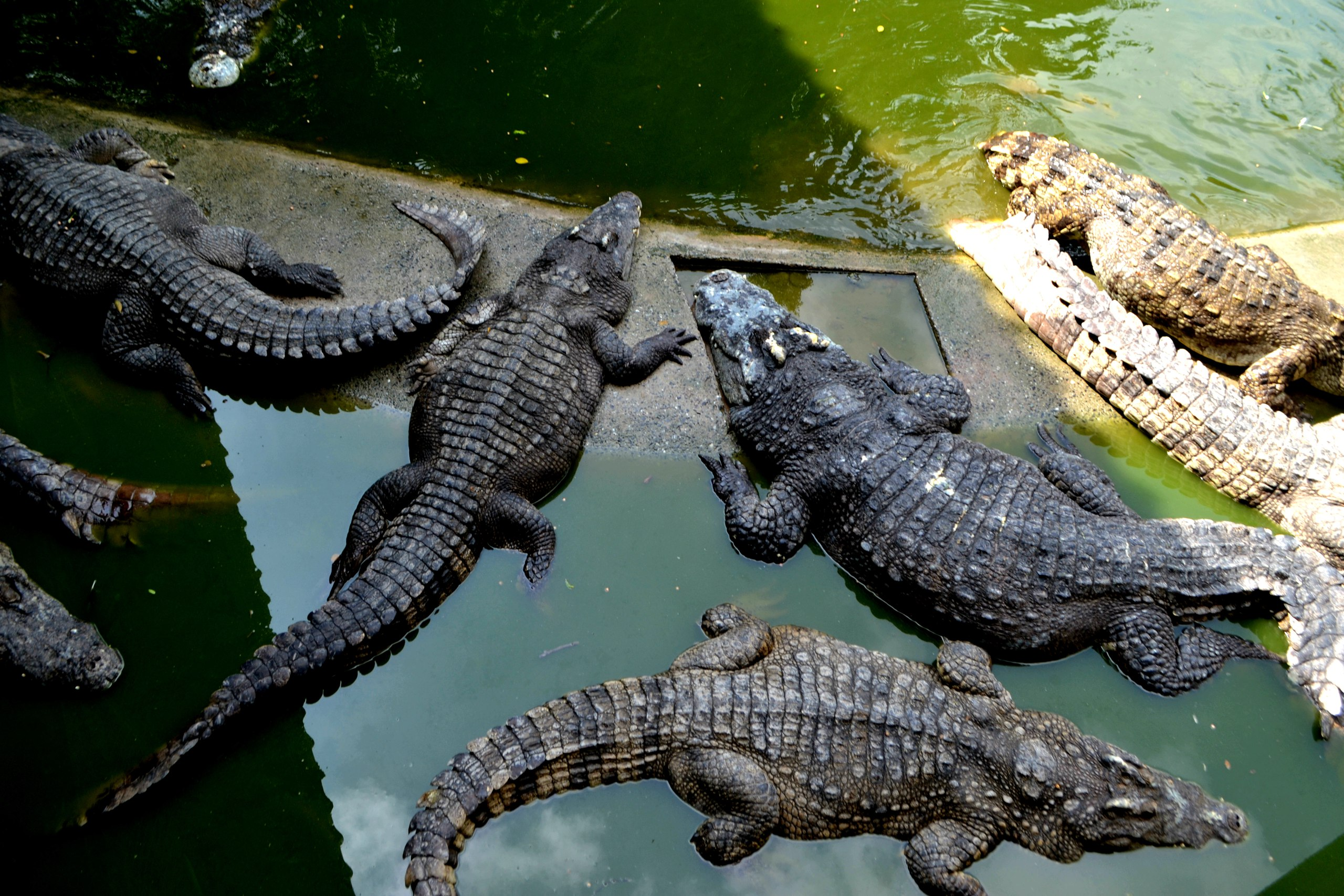 Елена Руденко ( Валтея ). Таиланд. Парк миллионолетних камней и крокодиловая ферма. IfCKoDxFJOo
