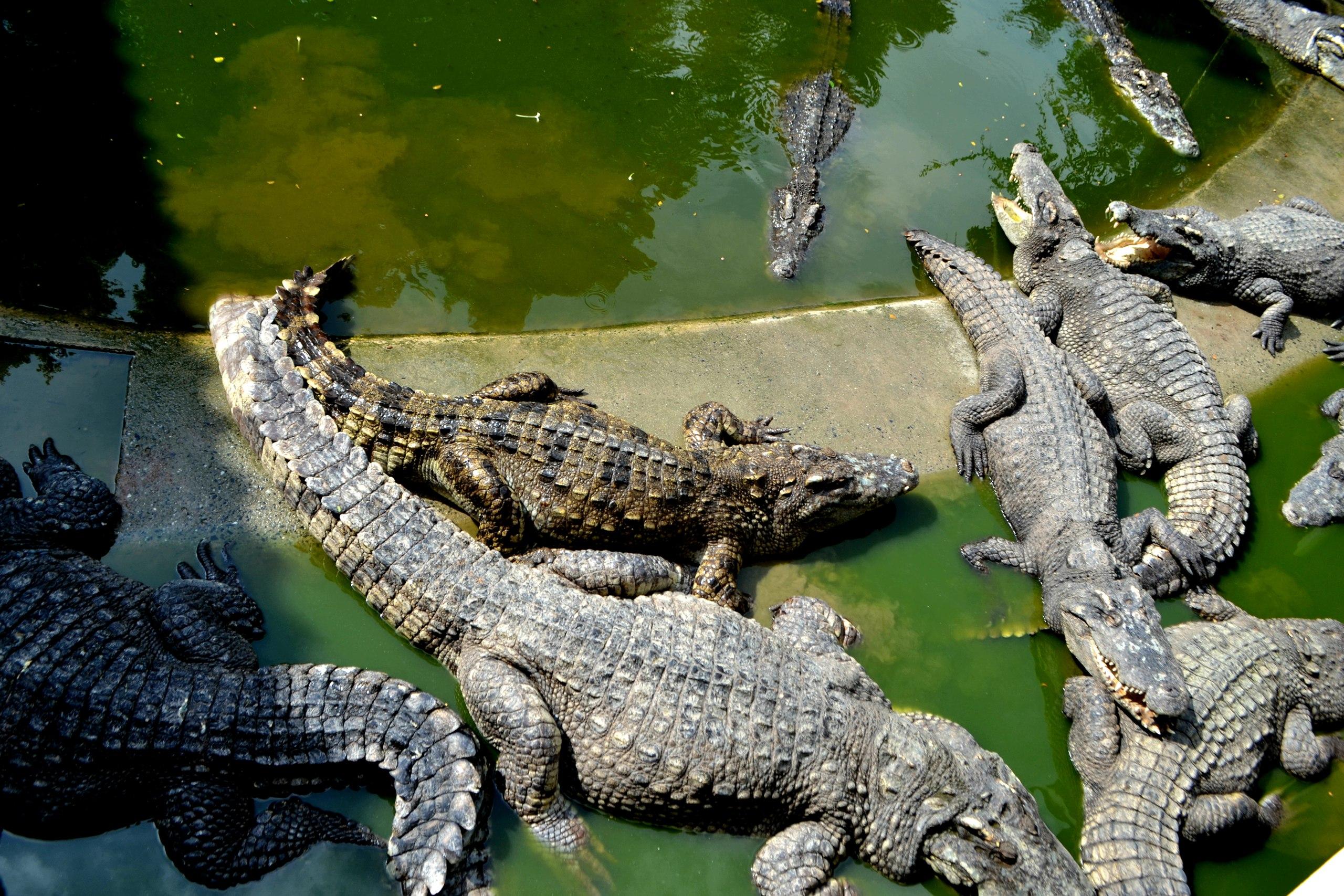 Елена Руденко ( Валтея ). Таиланд. Парк миллионолетних камней и крокодиловая ферма. SHiFGmQ-ui8
