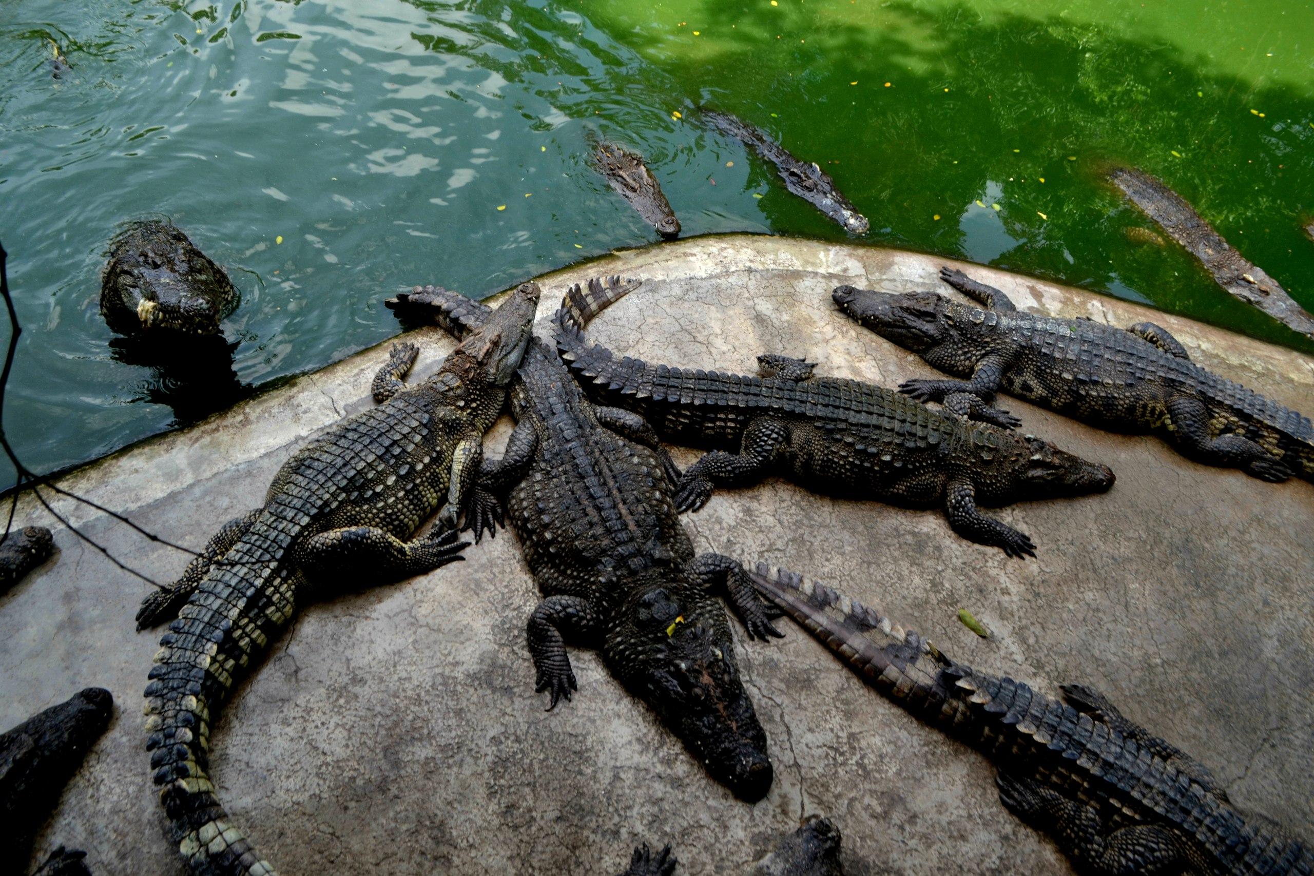 Елена Руденко ( Валтея ). Таиланд. Парк миллионолетних камней и крокодиловая ферма. - Страница 2 BYf3xY71k68