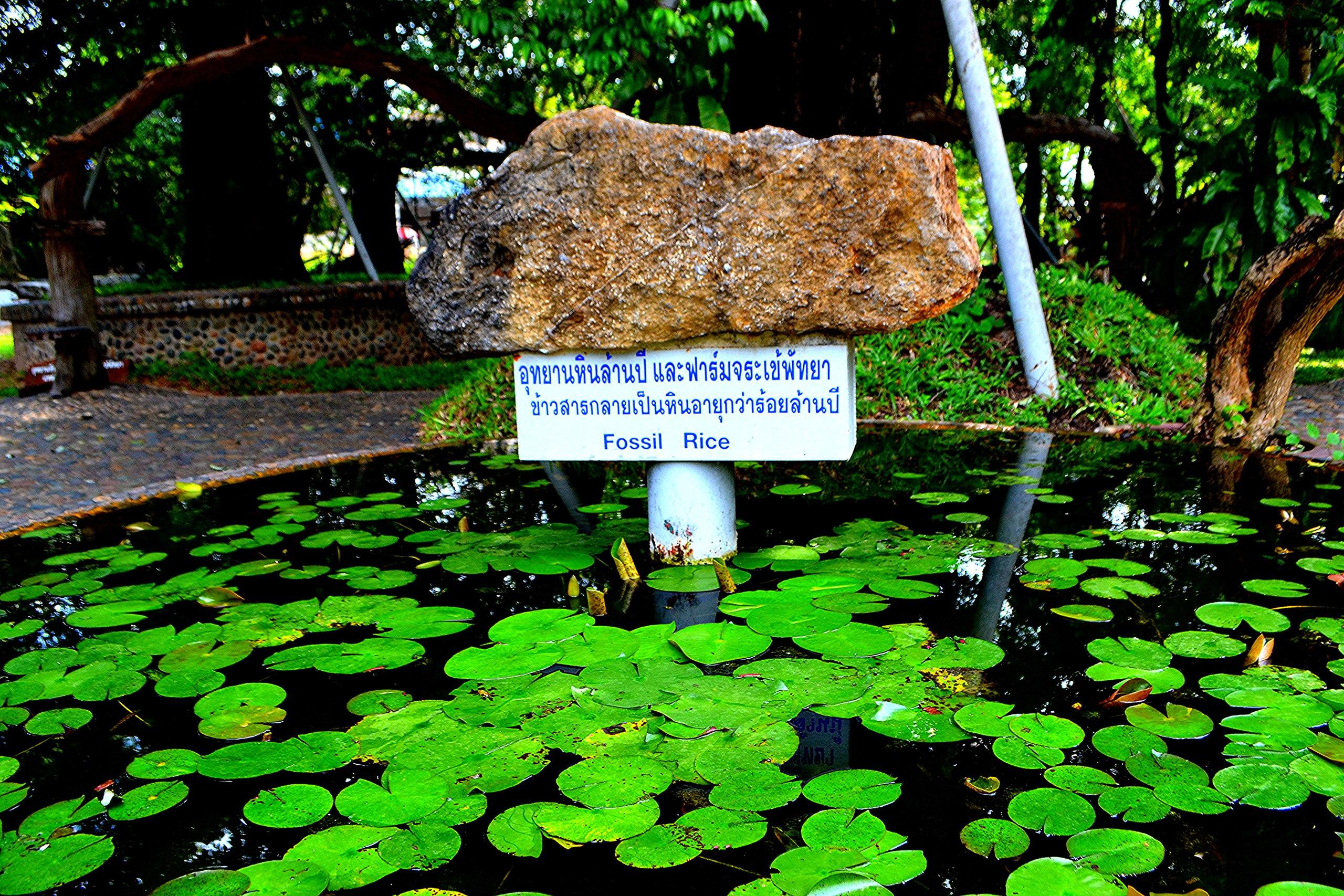 отдых - Елена Руденко ( Валтея ). Таиланд. Парк миллионолетних камней и крокодиловая ферма. - Страница 3 4QzpMPArDJw