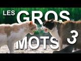 LES GROS MOTS 3 (la revanche du domin