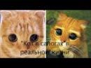 Мута- Кот в Сапогах в реалной жизни.