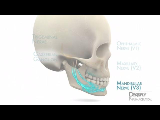 Mandibular Anesthesia Injection Techniques | DENTSPLY Pharmaceutical
