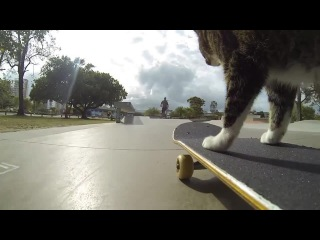 Skateboarding Cat (music by A.Rubik-the ride)