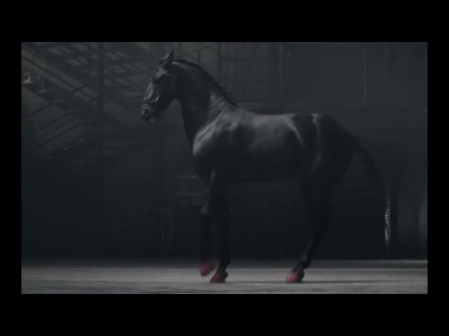 Эта лошадь танцует не хуже балерины Божественное исполнение от которого мурашки по коже