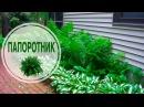 ПАПОРОТНИК в ландшафтном дизайне 🌟 Видео Обзор 🌟 сад и огород с HitsadTV
