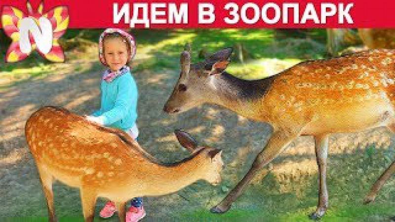 Идем в Зоопарк смотреть на оленей, кабанов, черепах, медведей и других животных ...