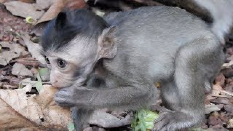Baby Monkey So Lovely Just Saw Now