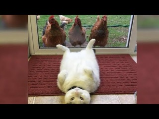 You will adobt a CAT after watching this - FUNNY CAT compilation