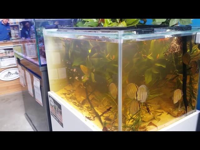 Rio Nanay - Green Discus - Authentic Biotope Aquarium