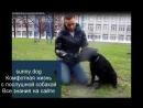 гиперактивная собака внимание