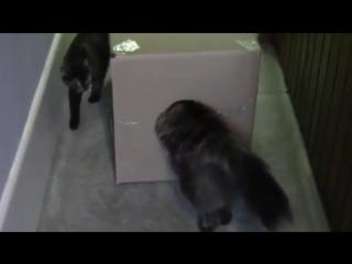 Кот в коробке)))))😈😈😈😈