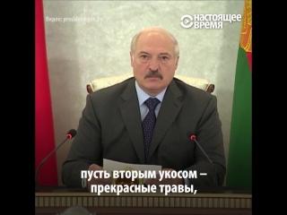 Лукашенко требует спасти урожай
