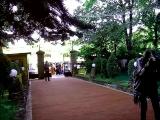 Садьба Саши и Тани  05.08.2017