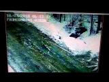 Волки ходят по п.Демьяново (10.03.2018) 6.15 утра