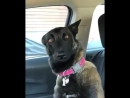 Реакция собаки на то, что у семьи будет ребёнок