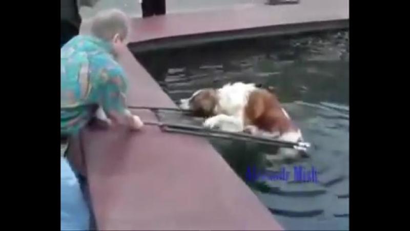 Спасение собак