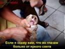 Страшная правда о лемурах и диких животных 18 +