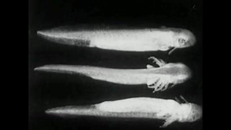 Radulescu - Capricorns Nostalgic Crickets (Liam Hockley, clarinet)
