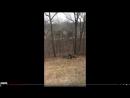 Видео с собаками которые не дают выбросить ёлку собрало 23 млн просмотров