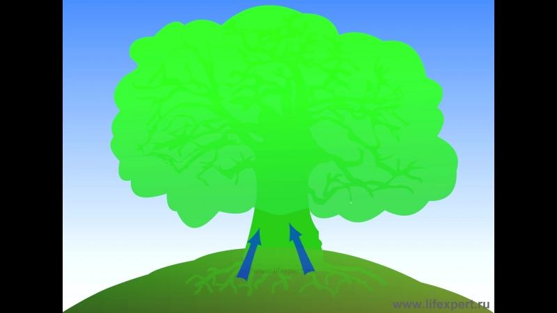 Дерево проточности _ www.lifexpert.ru
