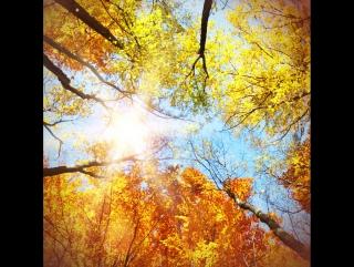Золотая осень в чашке   Lipton