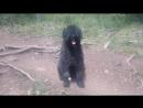 Собака с альпинисткого лагеря ледника Ак туру