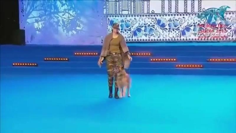 Когда она лежала на сцене с собакой судьи не ожидали увидеть первоклассное шоу