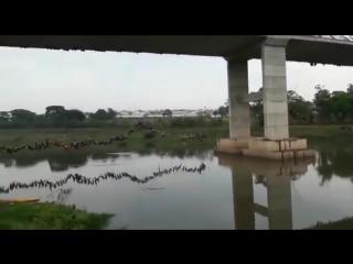 245 человек одновременно прыгают с моста
