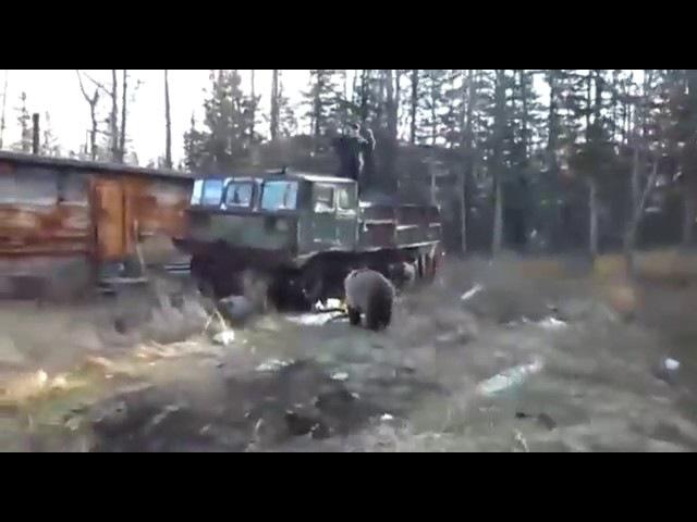 Это Россия, деткаОхота медведя