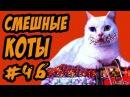 Приколы с Котами ДО СЛЁЗ Смешные коты и кошки 2017 смешное видео про котов