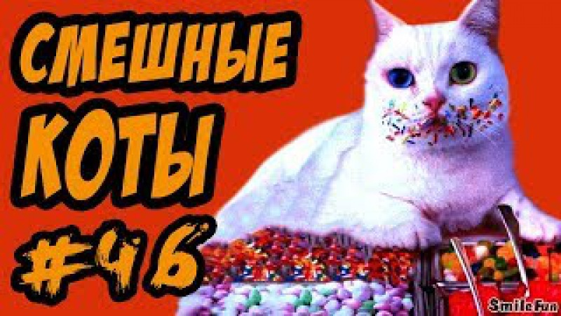 Приколы с Котами ДО СЛЁЗ Смешные коты и кошки 2017 | смешное видео про котов