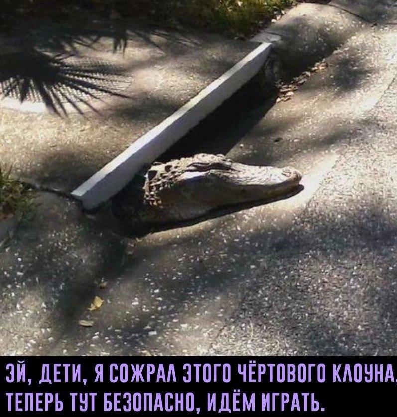 GZE7wJ_6J4w.jpg