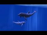 Ocean Rift Long Trailer