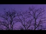 Vibrasphere - San Pedro (Low Sky Remix)