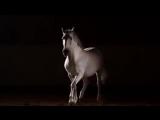 Schiller  Kate Havnevik - Hallucinating Beauty