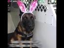 Полицейская собака Джестер