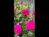 Цветы от Оксаны Николаевны.