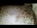 Тараканы в подвале на Грабцевском шоссе 156 б