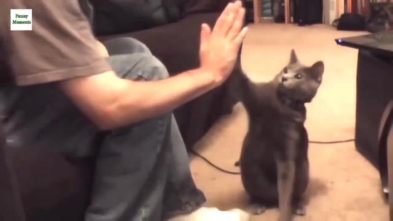 дай пять / котаны