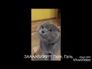 голова болин у кота