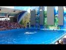 Delfinarul din orașul Odesa