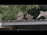 Возвращение в стаю (VHS Video)