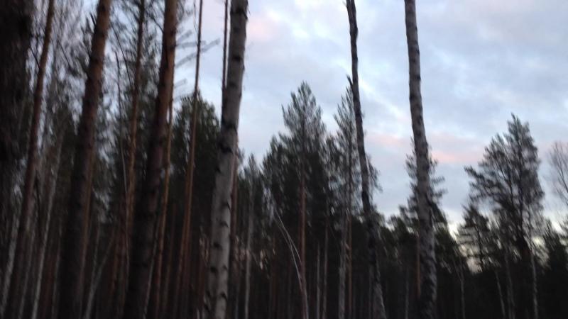 Вечер в лесах п. Станционный-Полевской