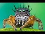 Мигранты съели насекомых Германии