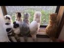 Смешные кошки приколы про кошек и котов 2017 89 Старенькое смешное видео Матроски ...