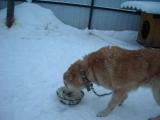 Моя  собака  по  кличке  КАЛЧАК  завтракает!