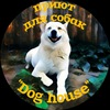 """Приют для собак """"Dog House"""""""