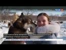 Россия 24 - Берингия-2018 на Камчатке началась самая протяженная в мире гонка на собачьих упряжках - Россия…