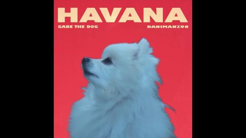 Gabe the dog - Havana